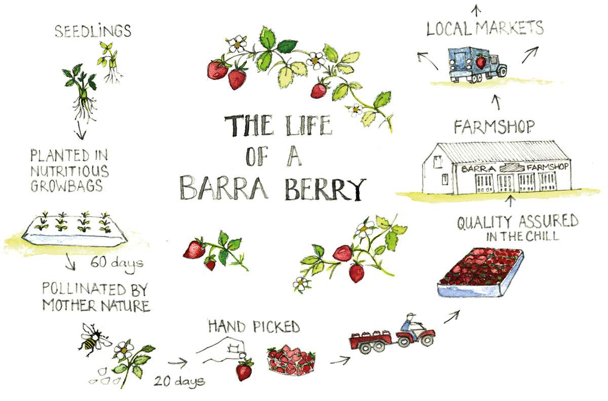 the-life-of-barra-berry
